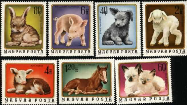 L051 匈牙利 74年 幼兽猫、狗、马、羊等 7全 9.00 动物 动物是相对于植物的生物。动物不能以光合作用来生存,只能靠捕食植物或其他动物。一般口语中指的动物是所有不是人的动物,其实人类也是动物界的一个种。 一般以为最早的动物是在4.5亿-5亿年前出现的。海绵动物门出现比较早,和别种大不一样。海绵有不同种类的细胞,但是细胞不分组为不同功能。 分类 域: 真核生物域 界: Animalia - 动物界 界 Subkingdom Parazoa - 侧生动物亚界 Porifera - 多孔动物门(海