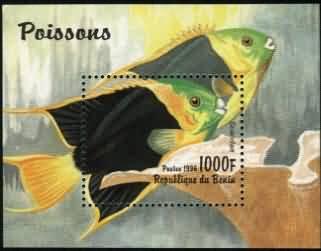 低等脊索动物海口鱼